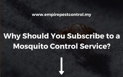 Why Should You Subscribe to a Mosquito Control Service?