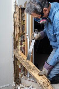 fixing termite damage