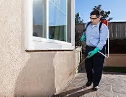 pest control keeping bugs away