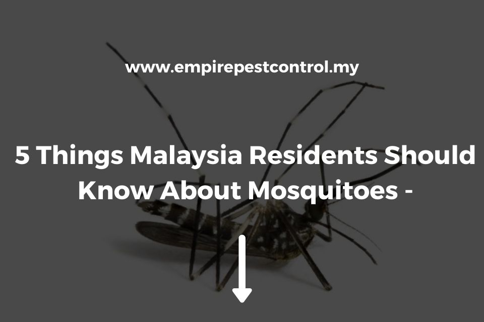 5 Things Malaysia Residents Should Know About Mosquitoes