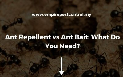 Ant Repellent vs Ant Bait: What Do You Need?