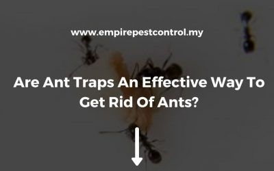 Are Ant Traps An Effective Way To Get Rid Of Ants?