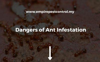 Dangers of Ant Infestation