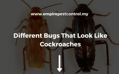 Different Bugs That Look Like Cockroaches