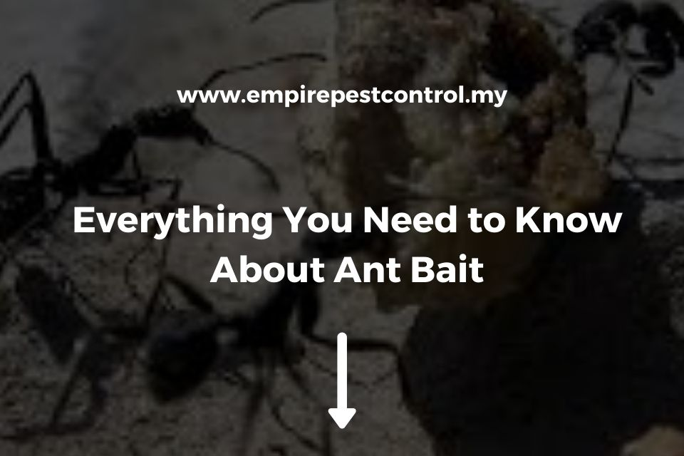 Everything You Need to Know About Ant Bait