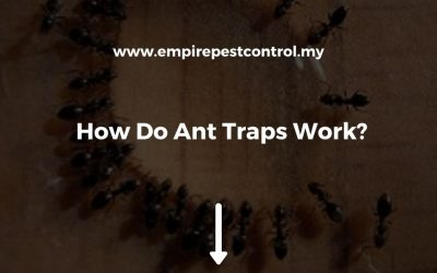 How Do Ant Traps Work?