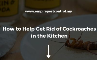 How to Help Get Rid of Cockroaches in the Kitchen