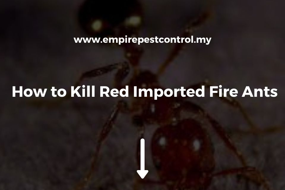 How to Kill Red Imported Fire Ants
