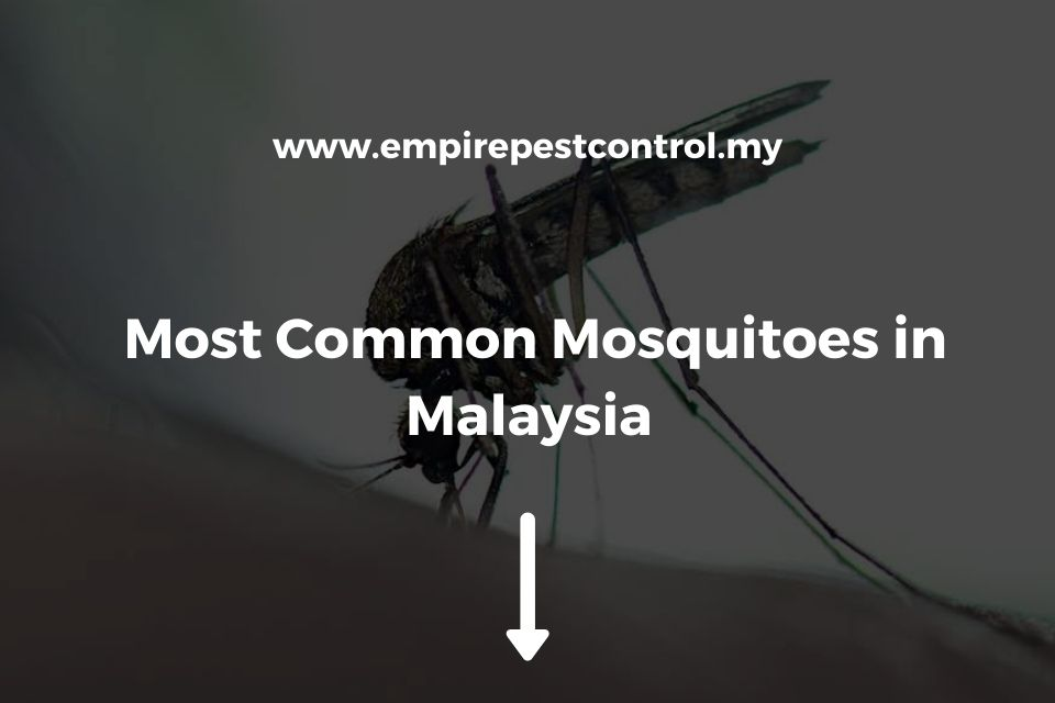 Most Common Mosquitoes in Malaysia