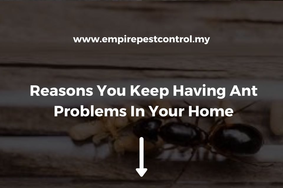 Reasons You Keep Having Ant Problems In Your Home