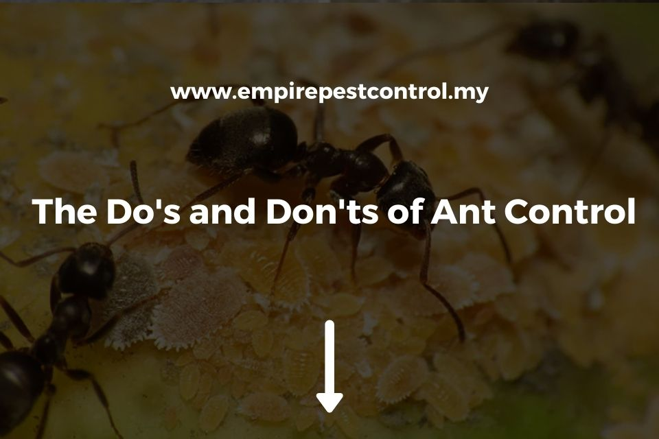 The Do's and Don'ts of Ant Control