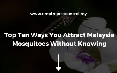 Top Ten Ways You Attract Malaysia Mosquitoes Without Knowing