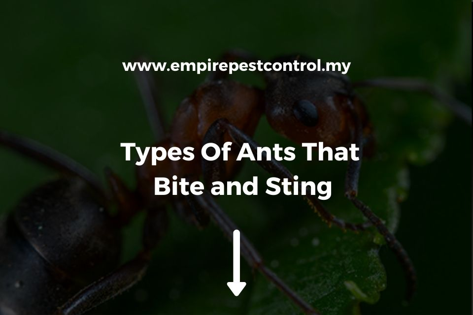Types Of Ants That Bite and Sting