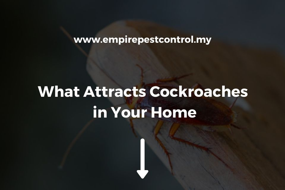 What Attracts Cockroaches in Your Home