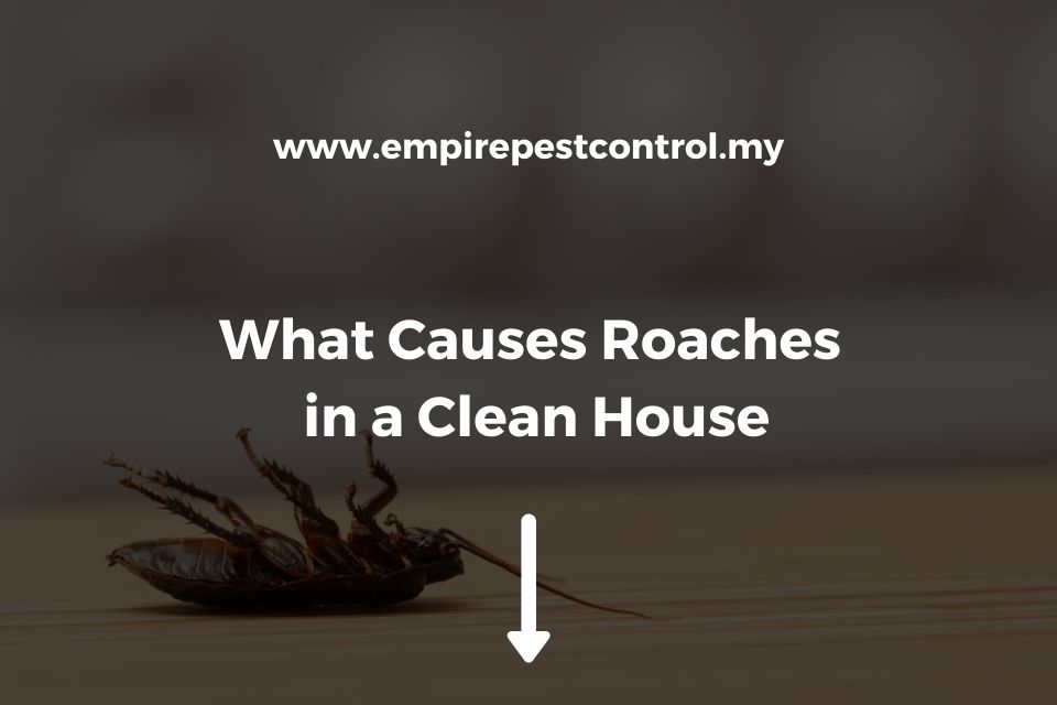 What Causes Roaches in a Clean House
