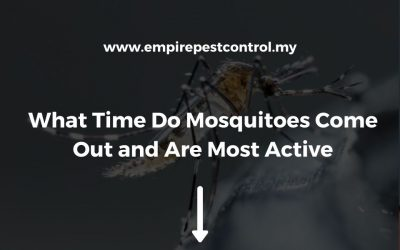 What Time Do Mosquitoes Come Out and Are Most Active?