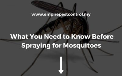 What You Need to Know Before Spraying for Mosquitoes