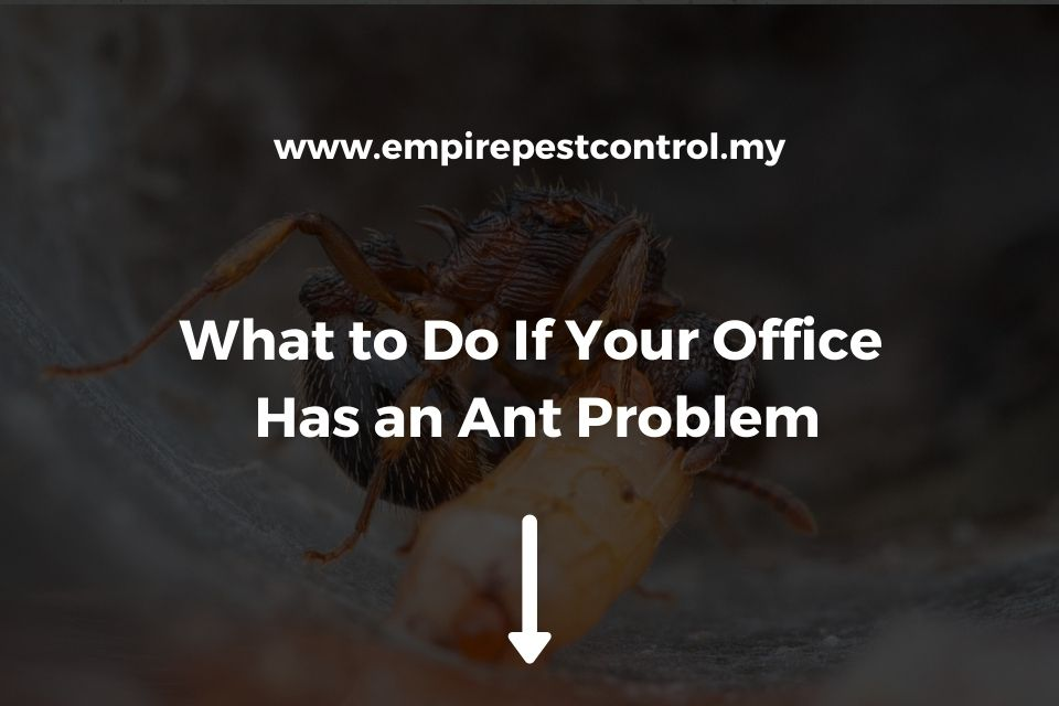 What to Do If Your Office Has an Ant Problem