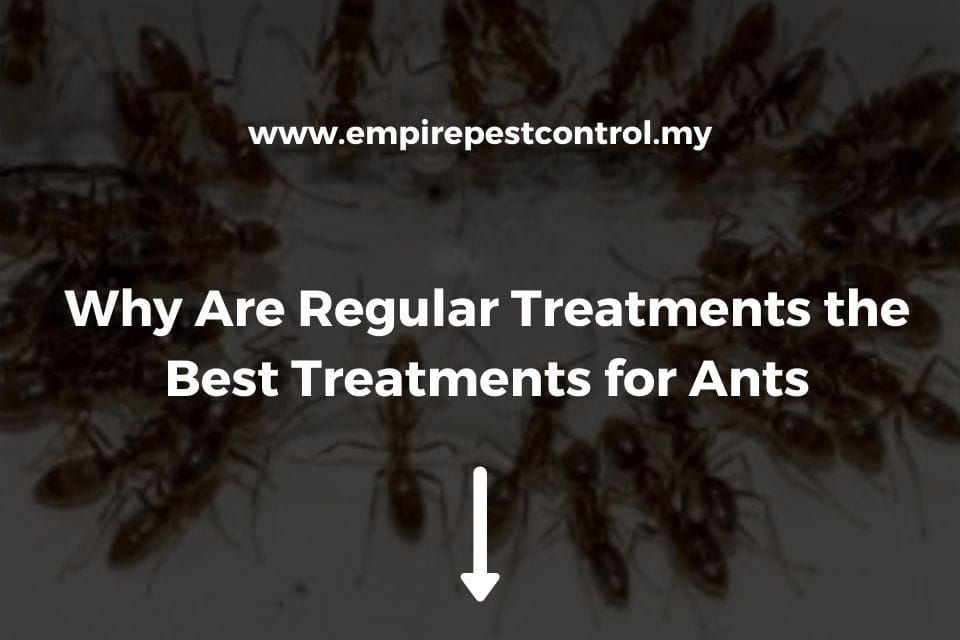 Why Are Regular Treatments the Best Treatments for Ants