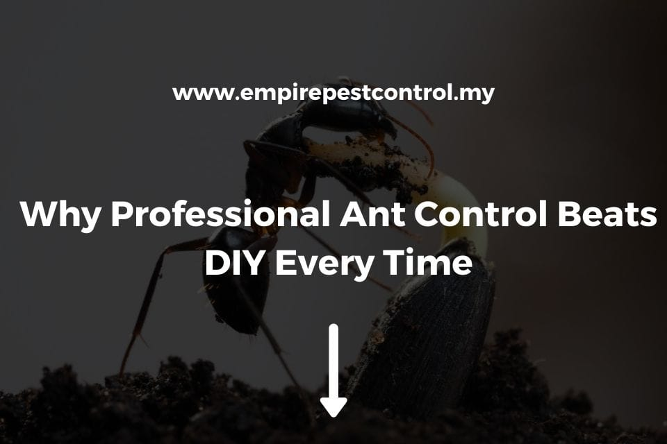 Why Professional Ant Control Beats DIY Every Time