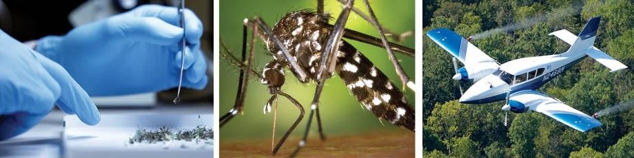 mosquito programs