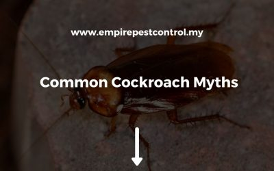 Common Cockroach Myths