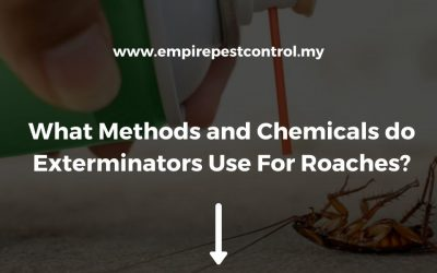 What Methods and Chemicals do Exterminators Use For Roaches?