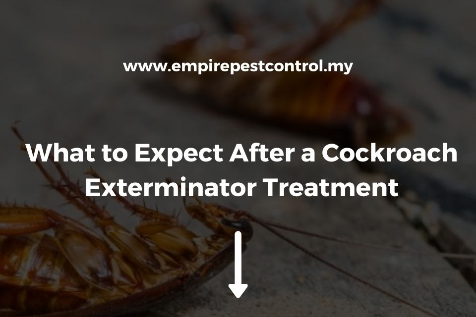 What to Expect After a Cockroach Exterminator Treatment